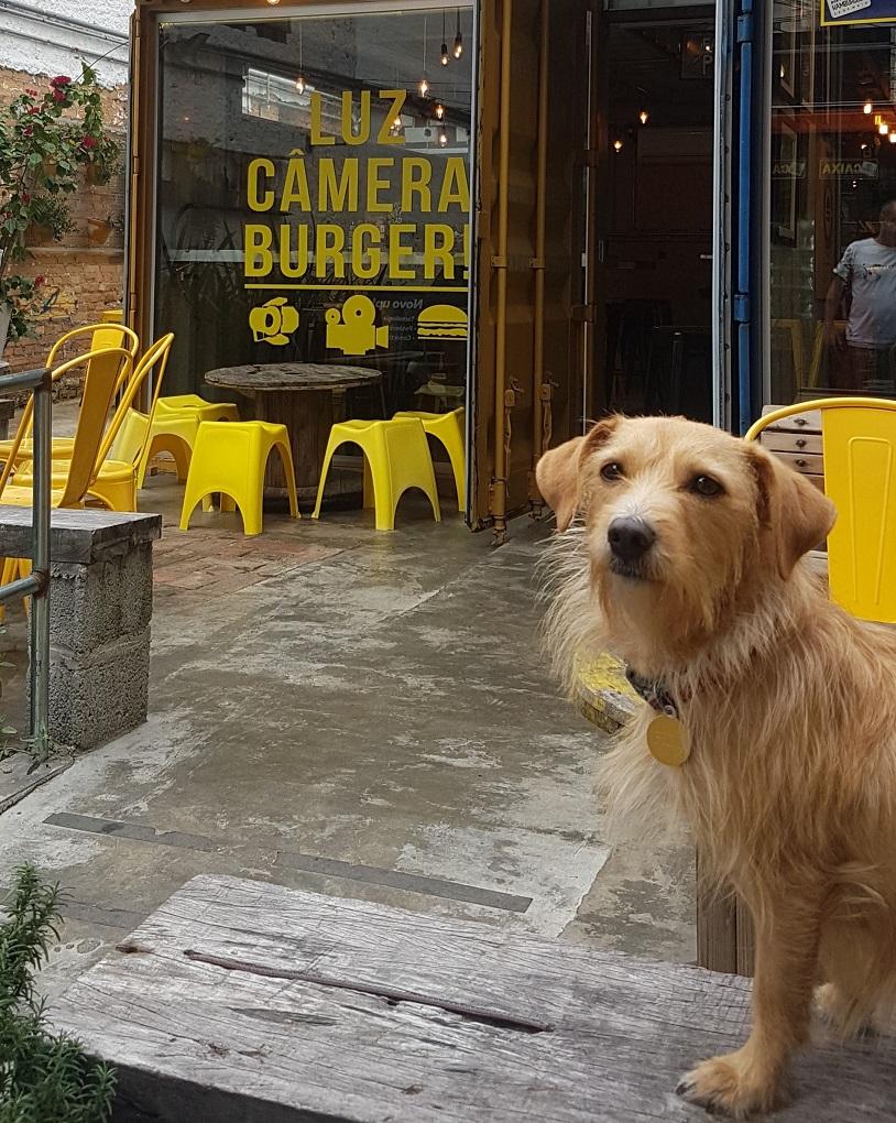 pet friendly luz camera burger